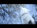 Выживая с волками / Survivre avec les loups 2007 ВDRiр 720р vk/Feokino
