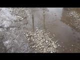 42-ой квартал.Поставленные асфальтовые заплатки смывают вешние воды на нашей внутриквартальной дороге.