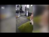 Как выбесить собаку