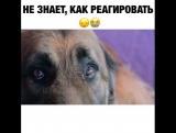С собакой плохо обращались и она не знает, как реагировать на доброту и ласку ?Как хорошо, что есть добрые люди ??❤️??#ptencof