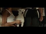 Его собачье дело (2017) Трейлер
