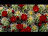 Charles Trenet - Le jardin extraordinaire