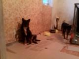 Молли,Фокси и кобель Вуди(гавкуша и кусака). Четвёртая девочка, совсем дикая,так и просидела в клетке.
