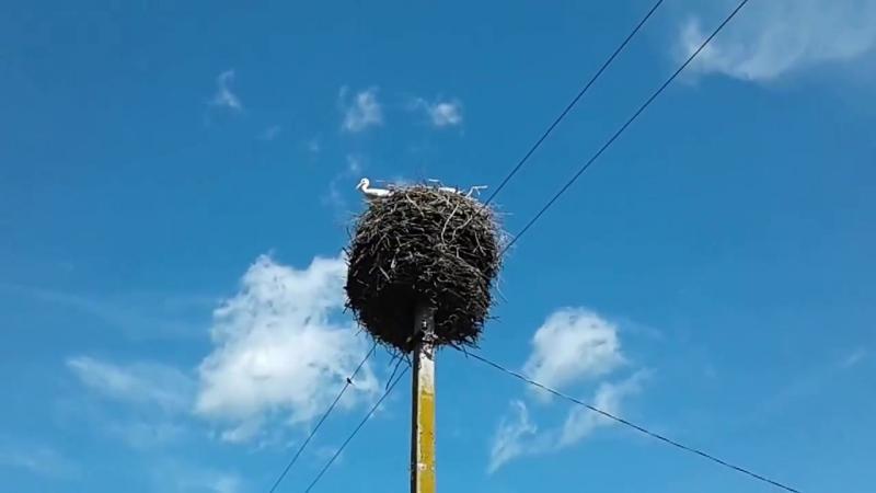 Буслы ў вёсцы Аборак • Аисты в деревне Оборок • Storks in the village Aborak
