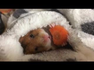 Морковка любимая еда Жорика