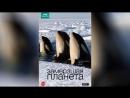 BBC Замерзшая планета 2011 Frozen Planet