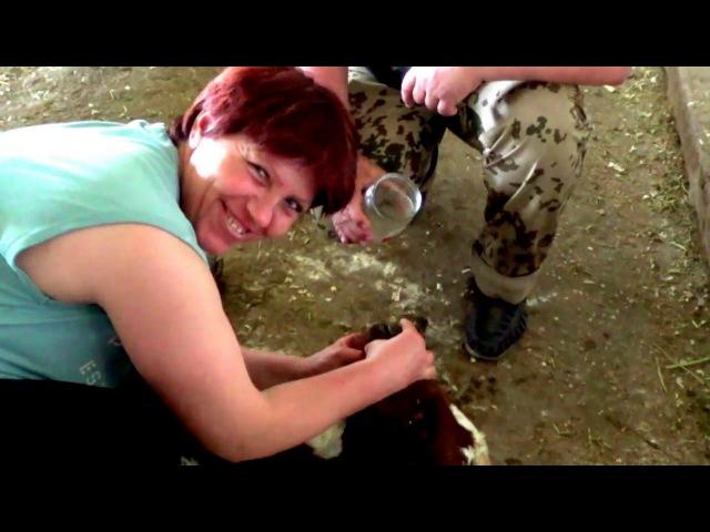 1.000.000 рублей за месяц, из коровьего навоза с Кумицким О. П.