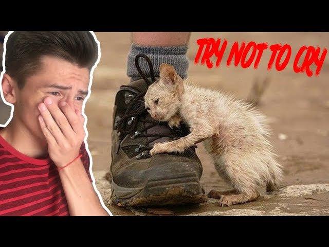 Уродливый кот 2 | ПОПРОБУЙ НЕ ЗАПЛАКАТЬ | TRY NOT TO CRY