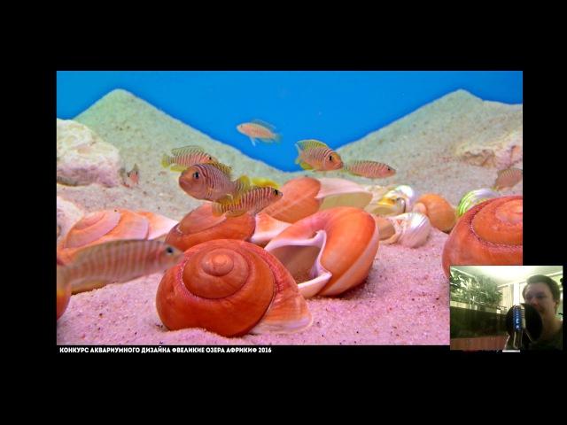 Смотрим участников конкурса аквариумного дизайна Великие озера Африки 2016