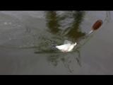 Лещ не поместился в садок.Рыбалка с Мишаней на Оке