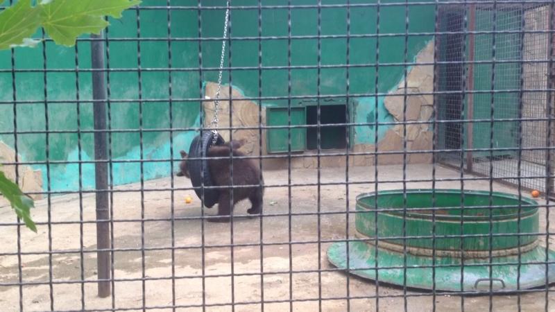 Медвежонок(Тайган)