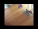голая стриженова