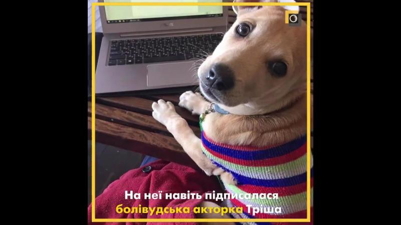 Українські мандрівники зробили врятовану собаку інстаграм-зіркою