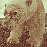 polarguide