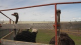 01_06 Страусинная ферма Школа 133 класс 7Б