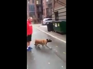 Extremely_Well_Trained_DogBro_Mazter55