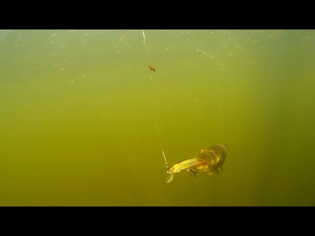 Рыбалка Подводная Съемка Щука На Pontoon 21 Shallow First by A Shanin KarakayS Chanal