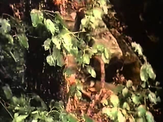 Я сюда больше никогда не вернусь Люба (Ролан Быков, 1990, драма, короткометражный)