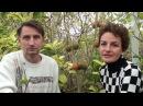 экзотические плодовые растения Наранхилла
