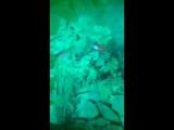 Алевтина Корнеева - Live