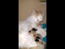 Кошка с котятами срочно ищут дом