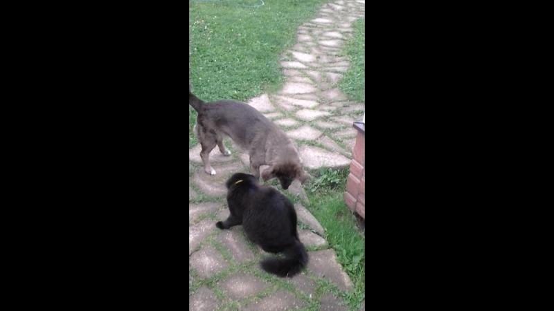 идет охота на мыша продолжение