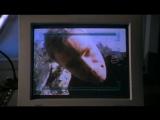 Звездные врата: ЗВ-1( Stargate SG-1 ) 4.21 Двойная опасность (Double Jeopardy)