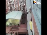 Мужик спасает собачку, которая застряла в прутьях балкона, рискуя своей жизнью!