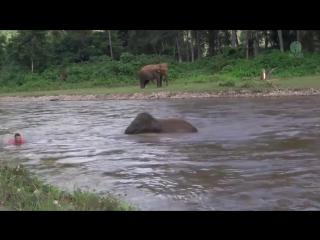 Слон помогает человеку