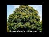 Bob Marley - Small Axe