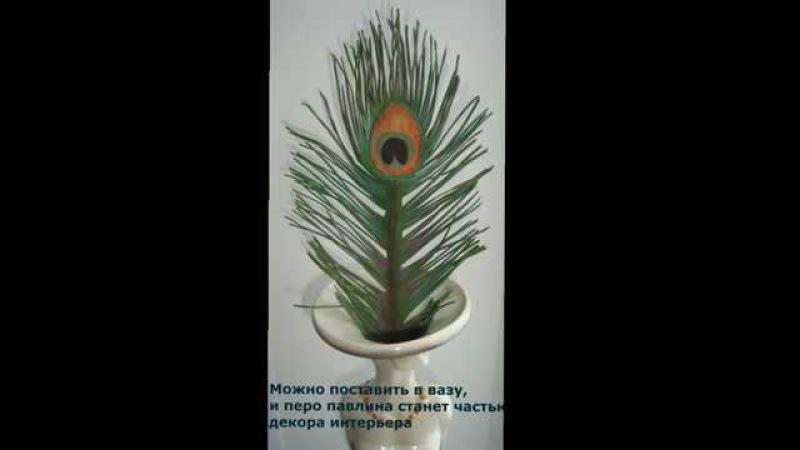 Авторский мастер-класс Гуреевой Елены по созданию пера павлина из зефирного фоамирана.