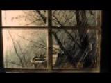 Vinicio Capossela - Nella Pioggia