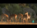 El delta del rio Okavango Africa salvaje Documental