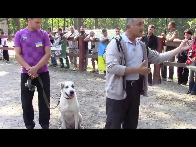 Гельды Кяризов - Поведение волкодава к человеку