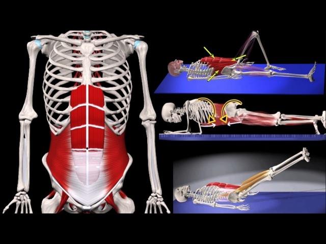 ПРЕСС. 3 ЭФФЕКТИВНЫХ упражнения. Мышцы стабилизаторы. БИОМЕХАНИКА