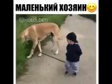 Маленький мальчик+большой пес