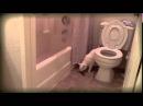 Кот насрал мимо унитаза!(Epic Fail)