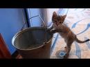 Котенок ныряет в воду. Смотреть до конца!