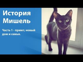 Как мы взяли котенка из приюта / Мишкина история. Часть 1