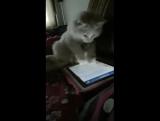 Кот и лента новостей в соцсети )