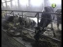 Об`єктивних причин для здорожчання молочної продукції немає