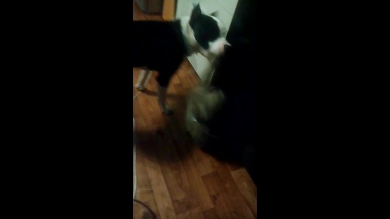 кошка vs собака » Freewka.com - Смотреть онлайн в хорощем качестве