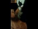 кошка vs собака