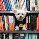 11 книг, которые стоит прочитать этим летом