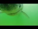 Massachusetts Division of Marine Fisheries