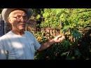 Уход за молодыми кустами винограда во второй половине сезона