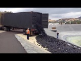 Fresh Transport Of Extreme Huge Beluga Caviar! - Adding Black Shade Balls To Protect Water Not To Evaporate