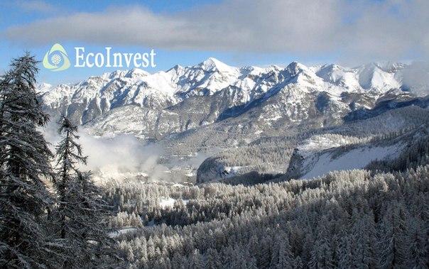 Внимание новость📢 Долгожданный проект от EcoInvest LLP🌿 :Инвестиции