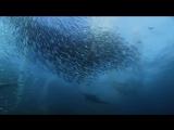 Королевство океанов 2011. Фильм Первый