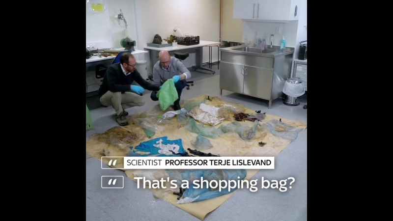 Киты умирают в мучениях из-за попадания в желудок платиковых пакетов/Whales dies with a stomach full of Plastic Bags